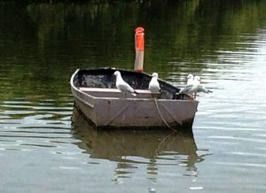 birds-on-boat