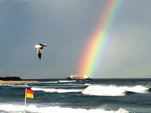 rainbow-bird2